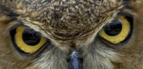 Owl by aeast