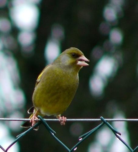 Bird on the Wire by nancyo