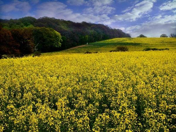 Fields of Gold by NickCoker