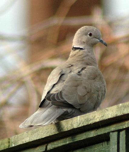 Dove by Stevie_G
