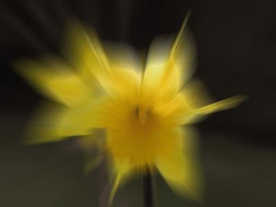 Daffodil Zoom by ian_w