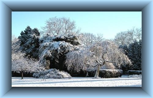Snowy by KBan