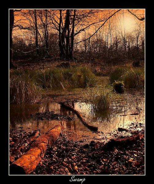 Swamp by Kris_Dutson