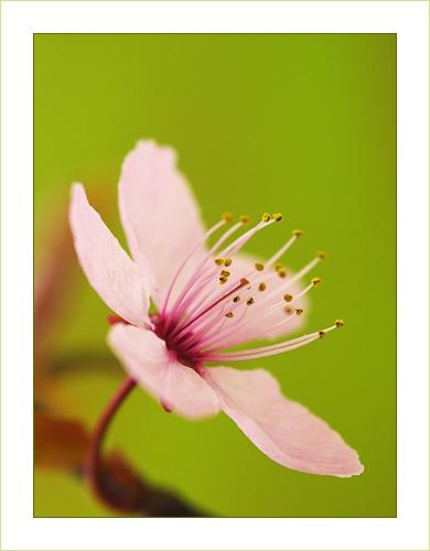 Blossom by Ewan