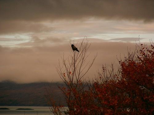 Autumn Bird by ianuk2003