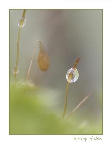 Dew drop on moss by Pete