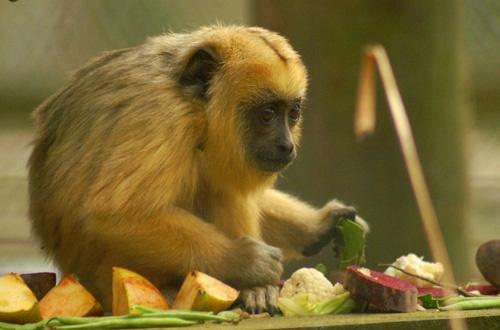 small monkey big world by gaz revs