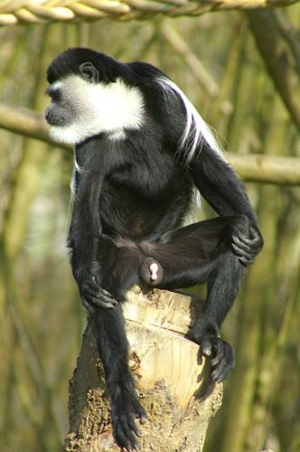 monkey flasher by gaz revs