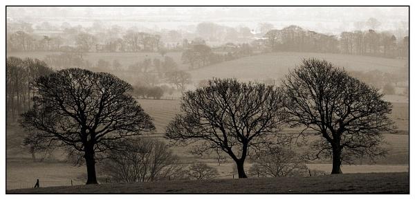 Three Trees by markthompson