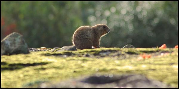 Prairie Dog View by mttmwilson