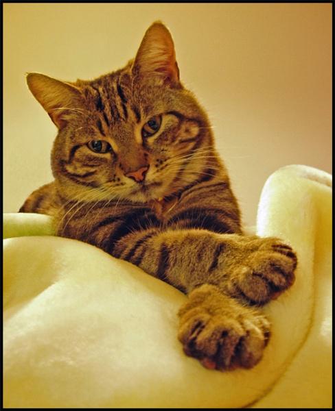 Smart Cat(re-post) by mttmwilson
