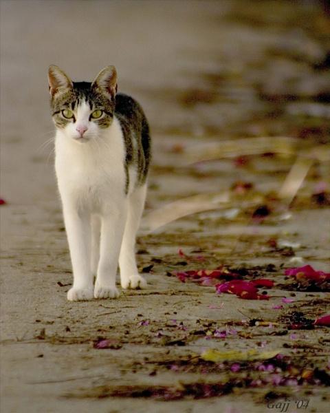 Corfu Cat by gajj