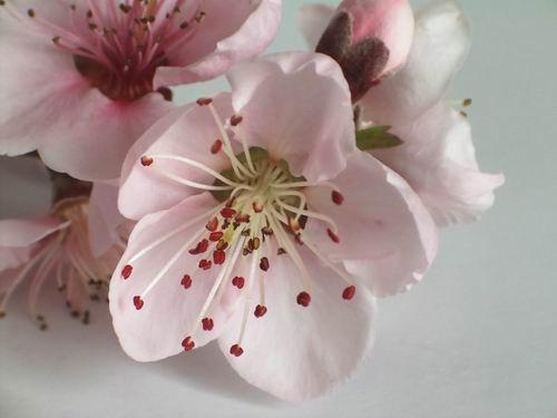 Blossom by dani2