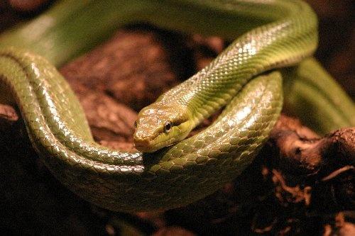 Bert The Snake by abtayler
