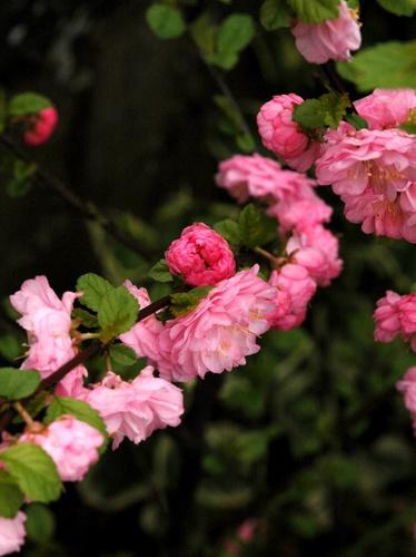 Springtime Delight by deavilin