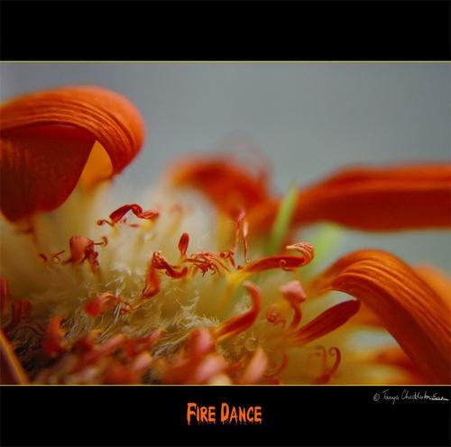 Fire Dance by tce5
