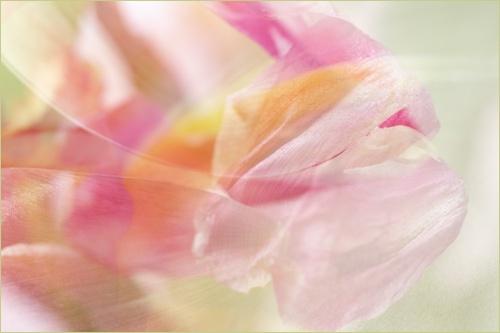 Abstract Flower VIII by webjam