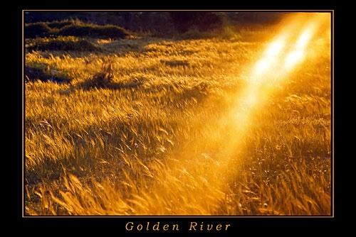 Golden River by elikag