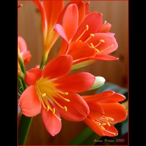 Joyful joyful joyful by harmony