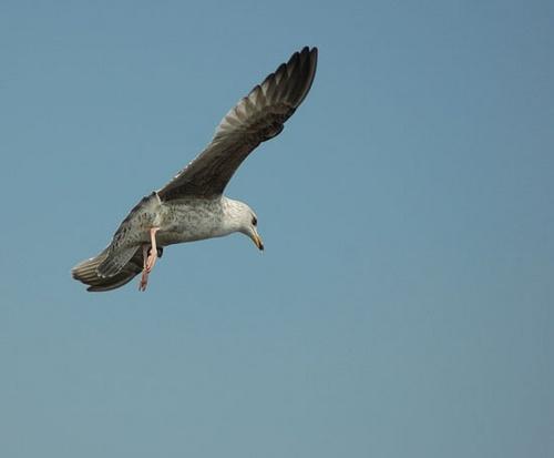 Brighton Gull by Stevie_G