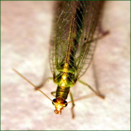 Bug\'s Life by RWalker