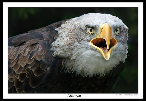 Liberty by Miles Herbert