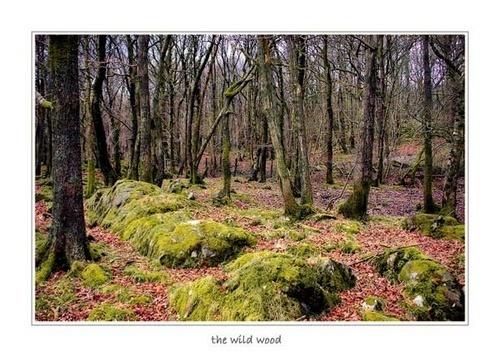 Wild Wood by claret