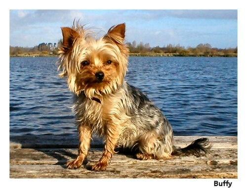 Buffy at the lake 2 by JonBrereton