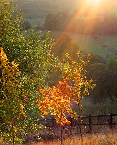 Autumn Light by iansamuel