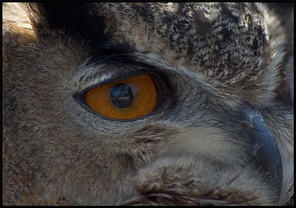 Birds eye view by mttmwilson