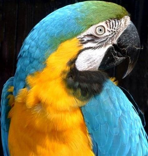 parrot ! by melliemel
