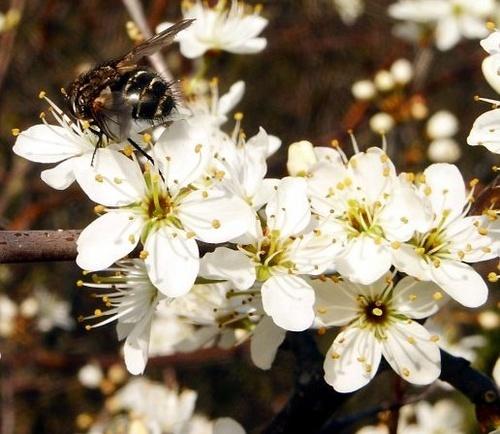 Blossom by silburkp