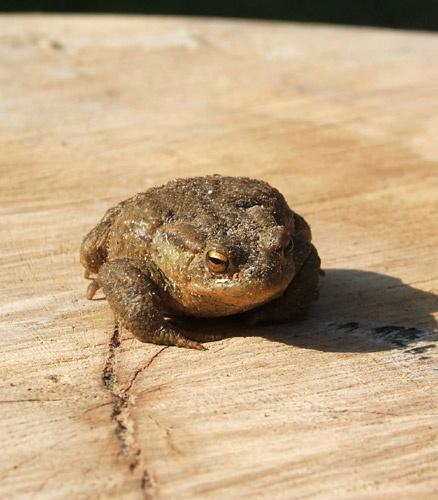 Frog by jenny