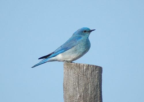 Bluebird by Danno