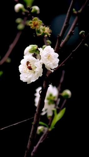 Spring Bud by khanhnguyen