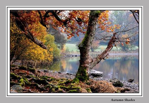 Autumn Shades by chrissycj