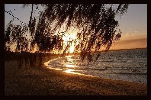 Sea Tree by ianuk2003
