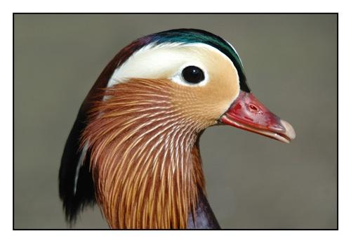Mandarin Face by sferguk