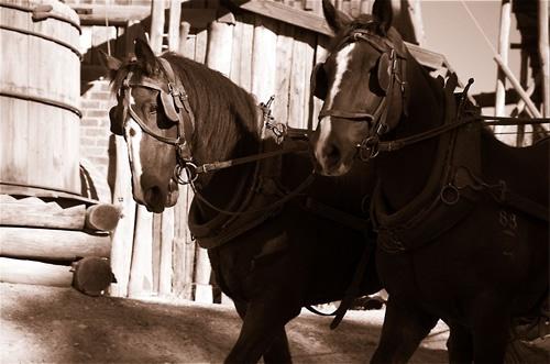 Work Horses by patrickfarrell