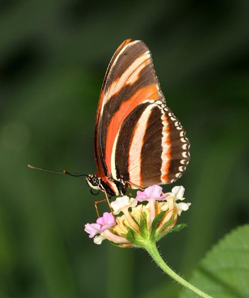 Butterfly by John_Wannop