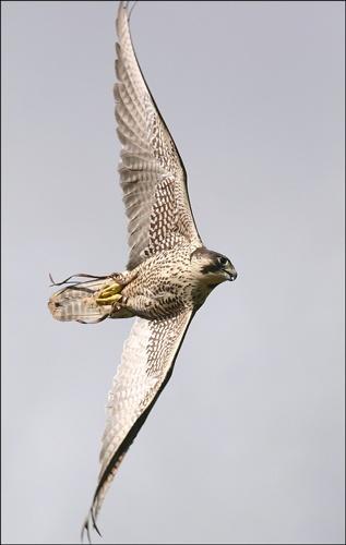 Fast Falcon by MartinjD