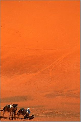 Sahara Desert by Joanie