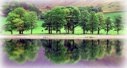 Trees Reflecting by TeresaH