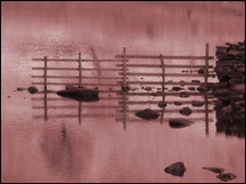 Fence by TeresaH