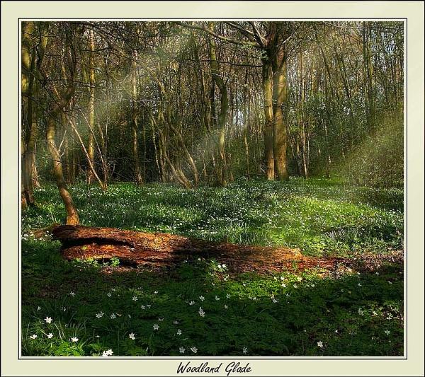 Woodland Glade by Kris_Dutson