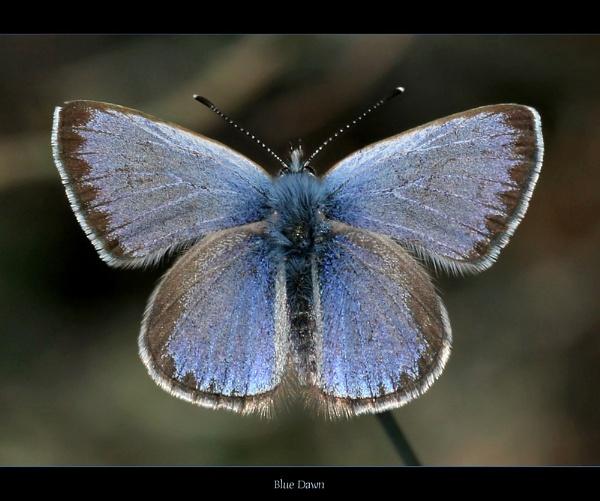 Blue Dawn by celestun