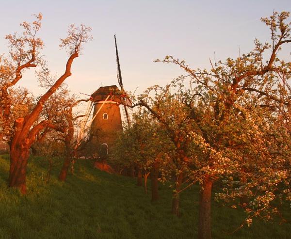 Beesd Windmill by conrad
