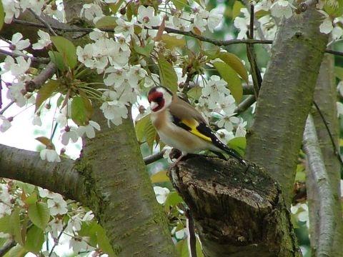 Blossom  Perch by speybay