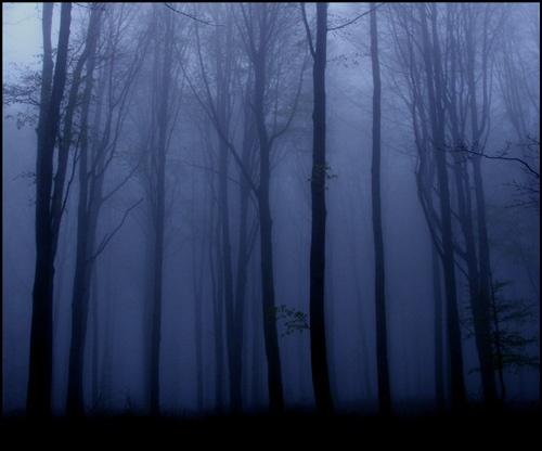 Fog by imjam