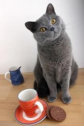 Waiting for my tea